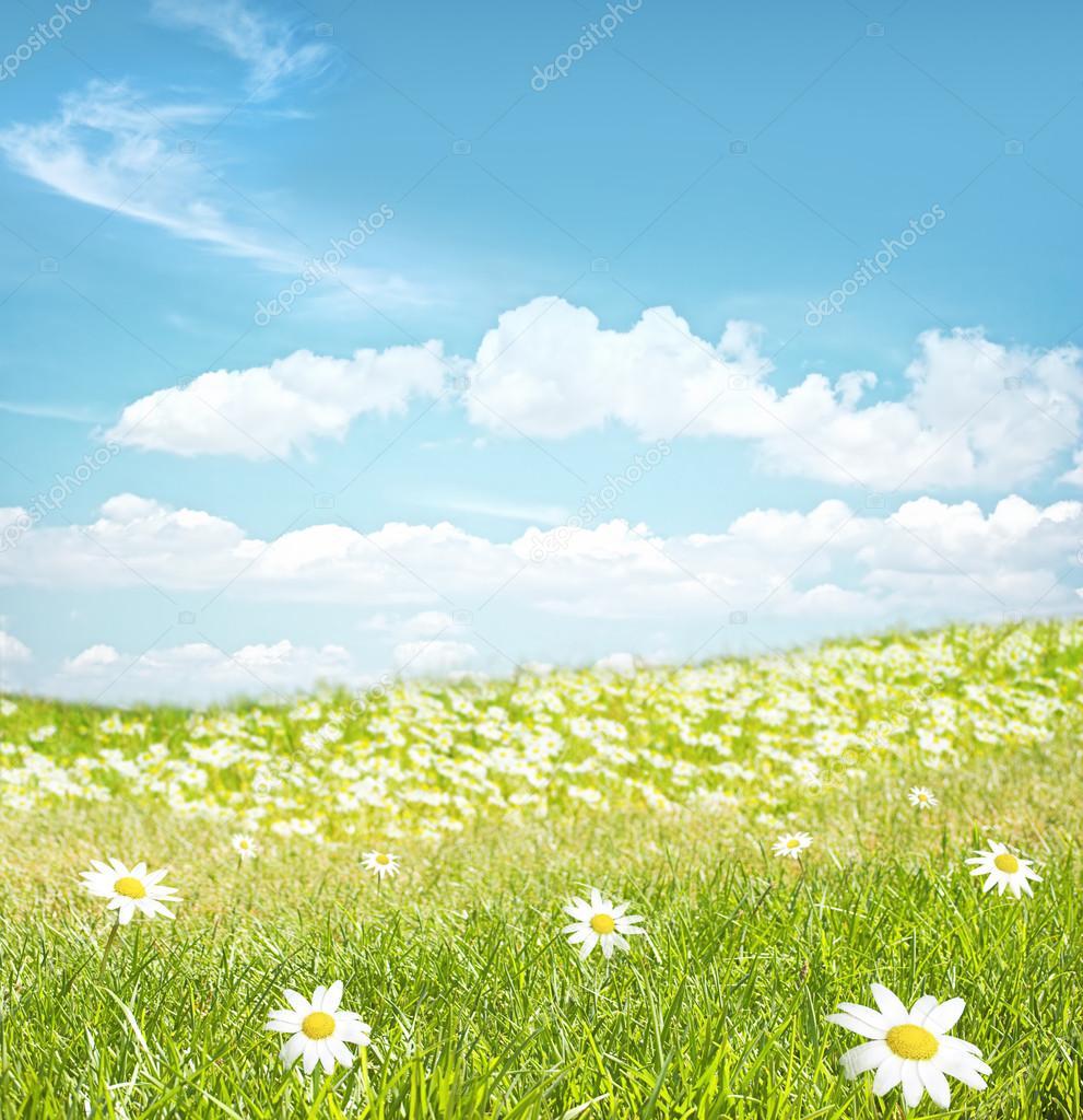 草和花朵边框   - 图库图片