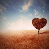 Love tree — Foto Stock