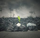 Pollution and new life — Stock Photo