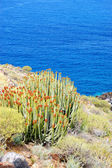Plants and Atlantic Ocean at background, Tenerife island, Spain — Stock Photo
