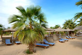 Palm tree on the beach at luxury hotel, Hurghada, Egypt — Stock Photo