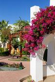 Villa dekoration på lyxhotell, sharm el sheikh, egypten — Stockfoto