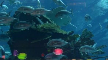 Rays, morays and fishes in the aquarium of Dubai Mall, Dubai, UAE — Stock video