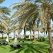Stock Photo: Sunbeds on the green lawn and palm tree shadow in luxury hotel,