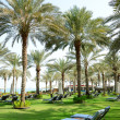 Stock Photo: Sunbeds on the green lawn and palm tree shadows in luxury hotel,