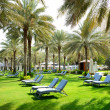 Sunbeds on the green lawn and palm tree shadows in luxury hotel, — Stock Photo