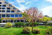 The lawn with blooming tree and building of luxury hotel, Antaly — Stock Photo