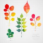 Vector herbarium. Vintage template. Watercolor leaf. Collection — Stock Vector
