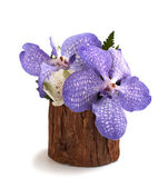 Orchis in wooden vase — Stock Photo