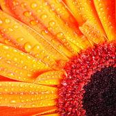 Macro flower — Stock Photo
