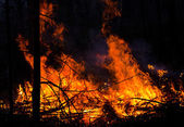 Forest on fire — Stock Photo