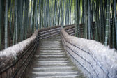 Bamboo Walkway — Stock Photo