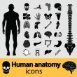 Stock Vector: Human anatomy icons