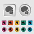 Anotomy skull — Stock Vector