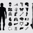 Human anatomy icons — Stock Vector #35432691