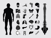Human anatomy icons — Stockvector