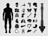 Människans anatomi ikoner — Stockvektor