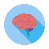 Cervello. — Vettoriale Stock