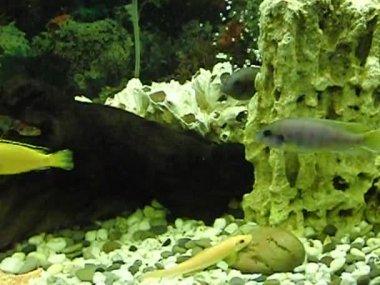 Underwater World aquarium — Stock Video