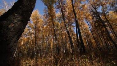 Golden Autumn. — Stock Video