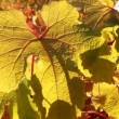 Golden Autumn. — Stockvideo