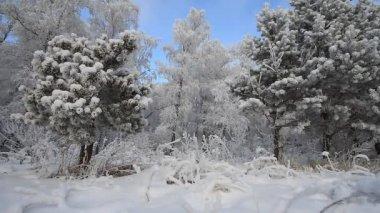 Les v zimě. — Stock video