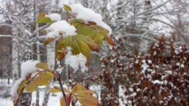 La hoja bajo la primera nieve. — Vídeo de stock