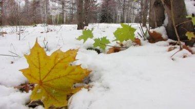 Leaf under first snow. — Stock Video