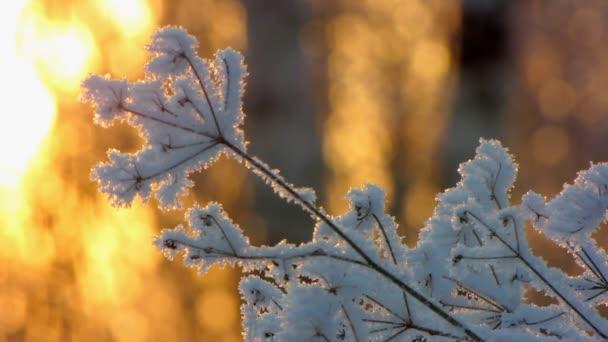 Día de invierno — Vídeo de stock
