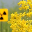 Common radioactivity warning symbol. - Stock Photo