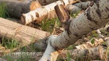 Logs. — Stock Video