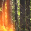 Fire, close up of flame burning. — Stock Video #21790117