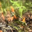 Fire, close up of flame burning. — Stock Video #21790145