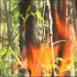 Fire, close up of flame burning. — Stock Video #21790149
