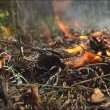 Fire, close up of flame burning. — Stock Video #21790173