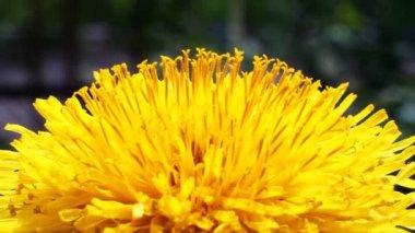 Sarı çiçek — Stok video