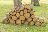 Pine Firewood — Stock Photo