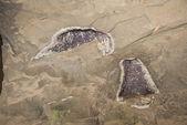 Geode in de muur — Stockfoto