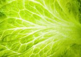 Macro texture of green lettuce leaves — Stock Photo