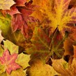 Multi colored fallen autumn leaves background — Stock Photo