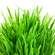 Royalty-Free Stock Photo: Green grass isolated on white background