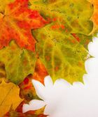 Multi colored fallen autumn leaves as border — Stock Photo