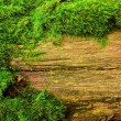Moss on tree — Stock Photo