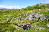 Paysage de la toundra polaire de l'été. — Photo