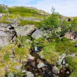 Stock Photo: Landscape of polar summer tundra