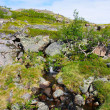 Landscape of the polar summer tundra — Stock Photo