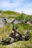 夏の北極ツンドラの風景. — ストック写真