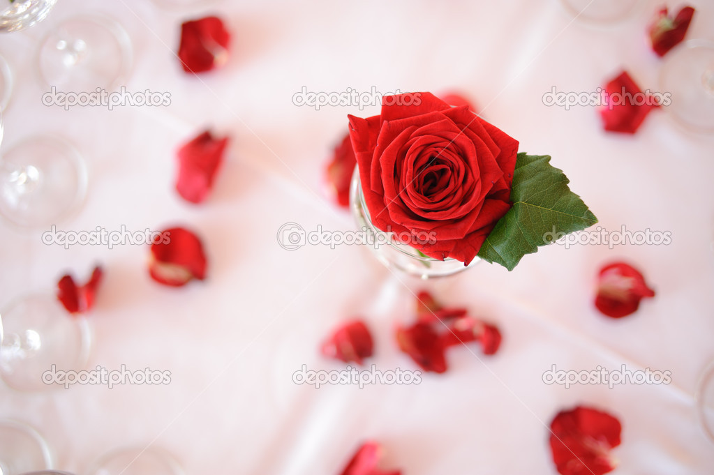 Red rose on the table — Stock Photo #13489999