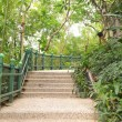 Path in tropical jungle — Stock Photo