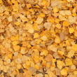 Carpet of fallen golden leaves — Stock Photo